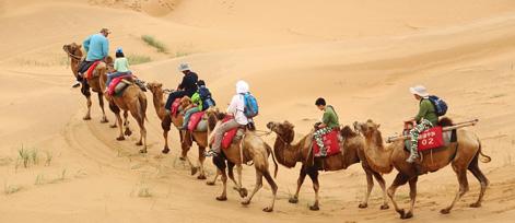 腾格里沙漠3日2晚亲子活动,沙漠改造,试把沙漠变绿洲